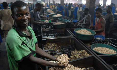 cashew nut factory mozambique
