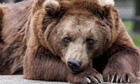 BEARS POSTPONE HYBERNATION WITH WARM WEATHER