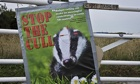 Badger cull gets three week extension