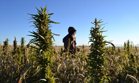 Hemp in Colorado 2014