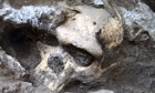 Homo erectus skull found in Dmanisi, Georgia