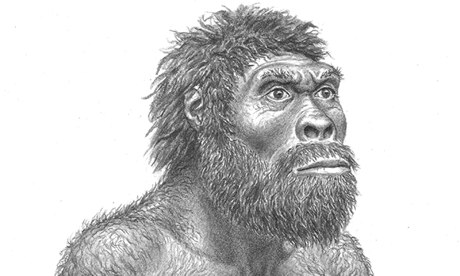 Reconstruction of Homo erectus