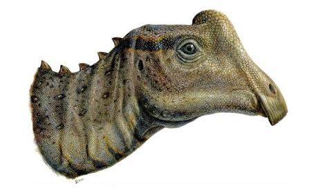 baby dinosaur head