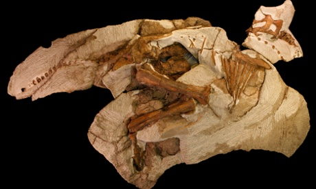 Baby dinosaur skeleton