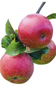 Lord Lambourne Apples