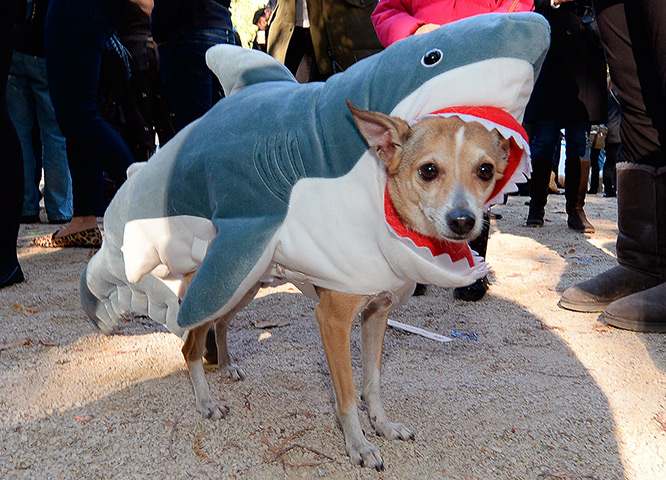Theguardian 2. & From JAWS to PAWS: 20 Adorable Pets Dressed Like Sharks