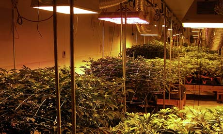 Marijuana Grow Room Setup Pictures to pin on Pinterest