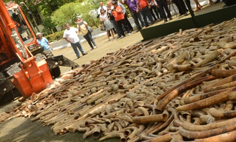 Governemnts that destroy seized illegal ivory are ignroing the basic economic facts of how the ivory markets work.
