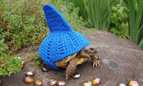 Woolly suits for tortoises - in pictures