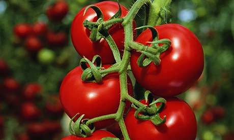 Tomatoes 008 - Top 10 foods for a healthy skin