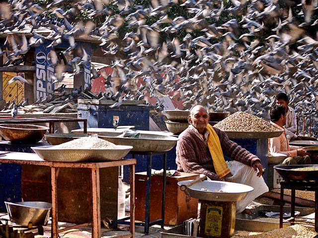 TPOTY: A grain seller, Jaipur, India