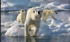 Charles Monnett polar bears