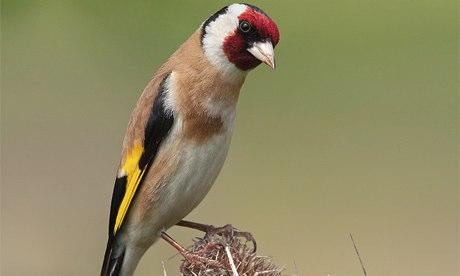 Alys Fowler: feed the birds