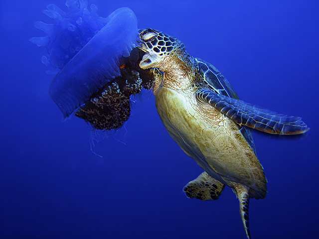 The week in wildlife in pictures environment the for What do jelly fish eat