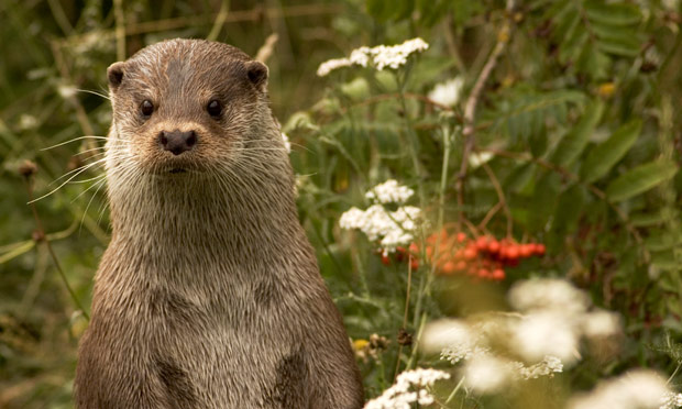 Fish farmer sues after otters 39 ate him out of house and for Otter fish houses