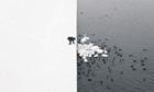 Man Feeding Swans, by Marcin Ryczek
