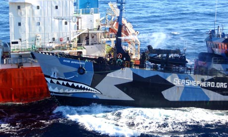 sea shepherd pirates