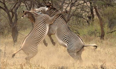 BBC's Africa series