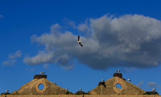 Storks are seen on an old sugar factory near Jerez de la Frontera, Spain.