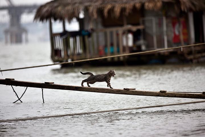 A-cat-running-on-a-wooden-014 - Iring Nga May Pagka Liwat Sa Tag-iya - Photos Unlimited