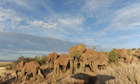 Elephants in Kenyan conservancy