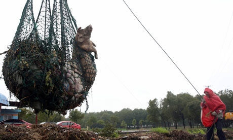 A worker hauls up dead pigs found floating in the Huangpu river flowing into Shanghai