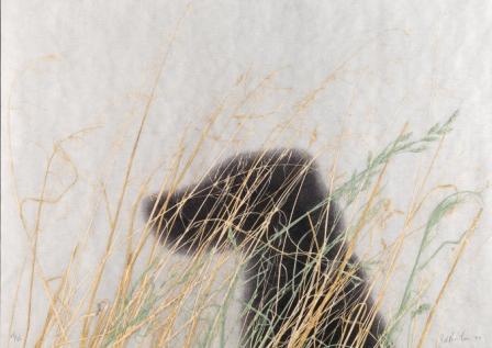 エド・ルシェの画像 p1_13