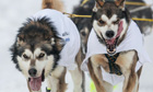 The Iditarod dog sled race in Anchorage