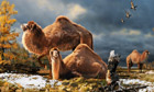 Fossilised giant camel bone discovered in High Arctic