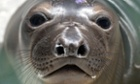 A young sea lion recovers at the Marine Mammal Care Center at Fort MacArthur in San Pedro, California.