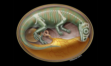 Illustration of a dinosaur embryo inside its egg.