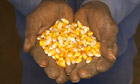 Corn in farmworkers' hands, North West Province, Boons, South Africa