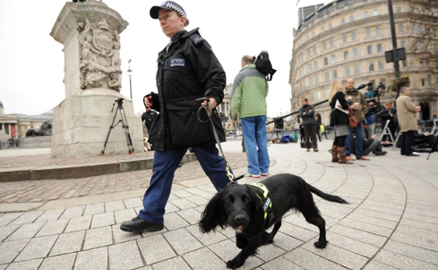 An eager-looking Police sniffer dog in Trafalgar Square being used to make final security checks.