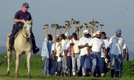 A field work crew at the Louisiana state penitentiary in Angola