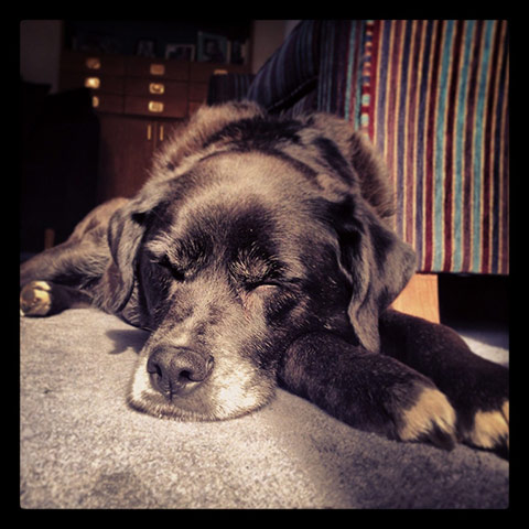 Top pets: sleeping dogs: Sleeping dogs: Dog asleep in sunshine