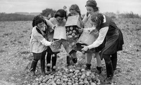 Schoolgirls gather potato crop harvest in 1943