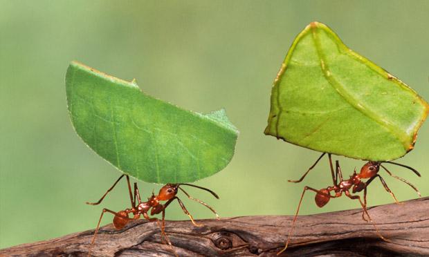Ants in home uk