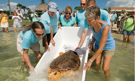 The Turtle Hospital, Florida