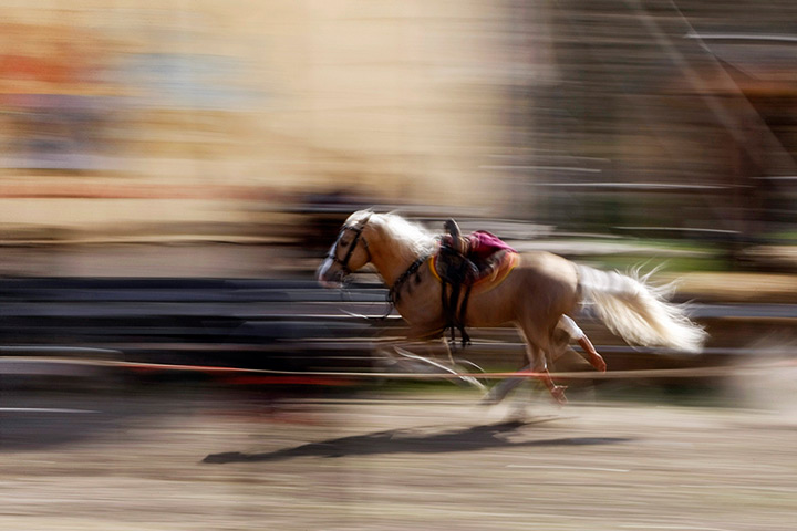24 hours: Kopachiv, Ukraine: A man performs while riding on a horse