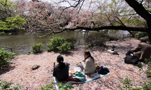 Life is a carpet of cherry blossom in this Tokyo park as people enjoy a picnic on the banks of a pond covered with petals.
