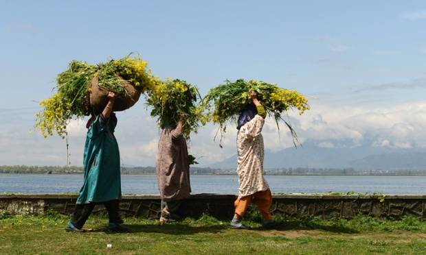 Kashmiri labourers carry fodder for cattle on the edge of Dal lake on the outskirts of Srinagar.