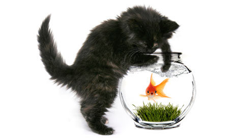 Black Cat Reaching Into Fishbowl