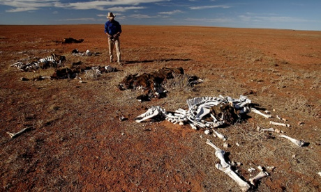 A stockman stands by dead horses and cattle on his property in 2005 in Leigh Creek, Australia.