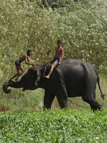 Indian mahouts play with an elephant on a hot day  in New Delhi. Heatwave conditions continued in the Indian capital, with temperatures registering a record high for the month of May - 45.6 degrees celsius, a television report said.