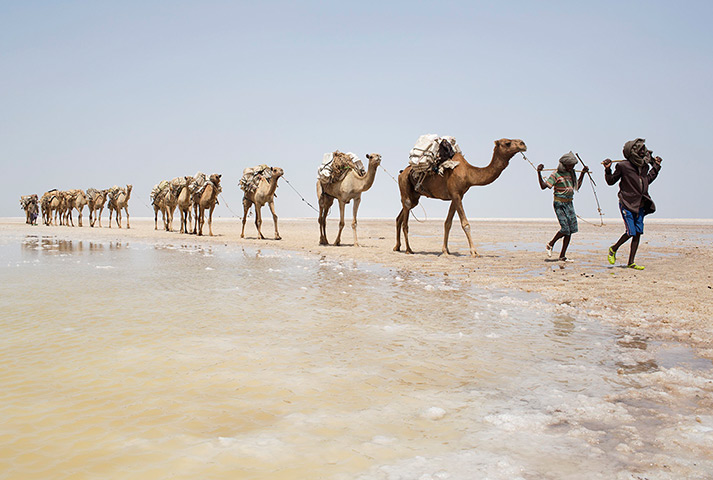 Perfect  Desert Here Are 15 Stunning Images Of Camel Caravans Crossing Deserts