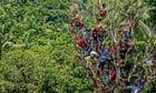 Climb trees view Pasola