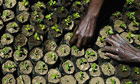 Kenyan farmers tend newly-planted trees