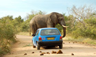 MDG : road safety : Kruger National Park, South Africa