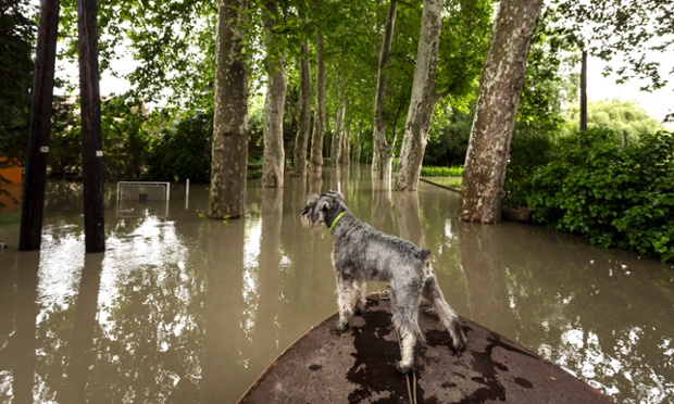 A dog looks at flooding caused by the swollen river Danube in Budakalasz, just north of Budapest, Hungary. The Danube is expected to rise to its highest-ever level in Budapest at the weekend, according to Hungarian authorities.
