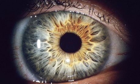 The human eye and eyelid